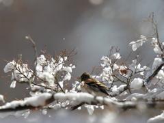 ・・・は今日も雪だった。