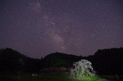 天の川銀河に映える又兵衛桜