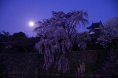 大和郡山城 追手向櫓と枝垂れ桜  かかる満月