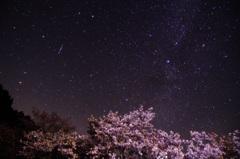 奈良最後の桜とこと座流星群