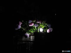 玄関先の灯り