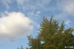 銀杏と秋の空