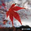 Autumn impact
