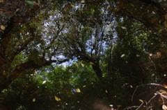 水鏡の緑樹