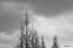 冬のSORA