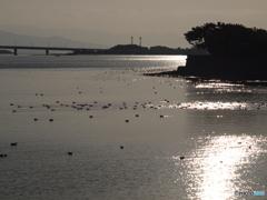 野鳥の休憩地
