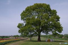樹木の安らぎ