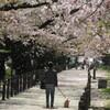 桜並木の中で