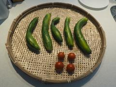 立秋の収穫物