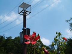 夏空に咲く花