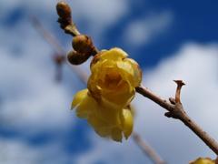 コダックブルーの空に咲く