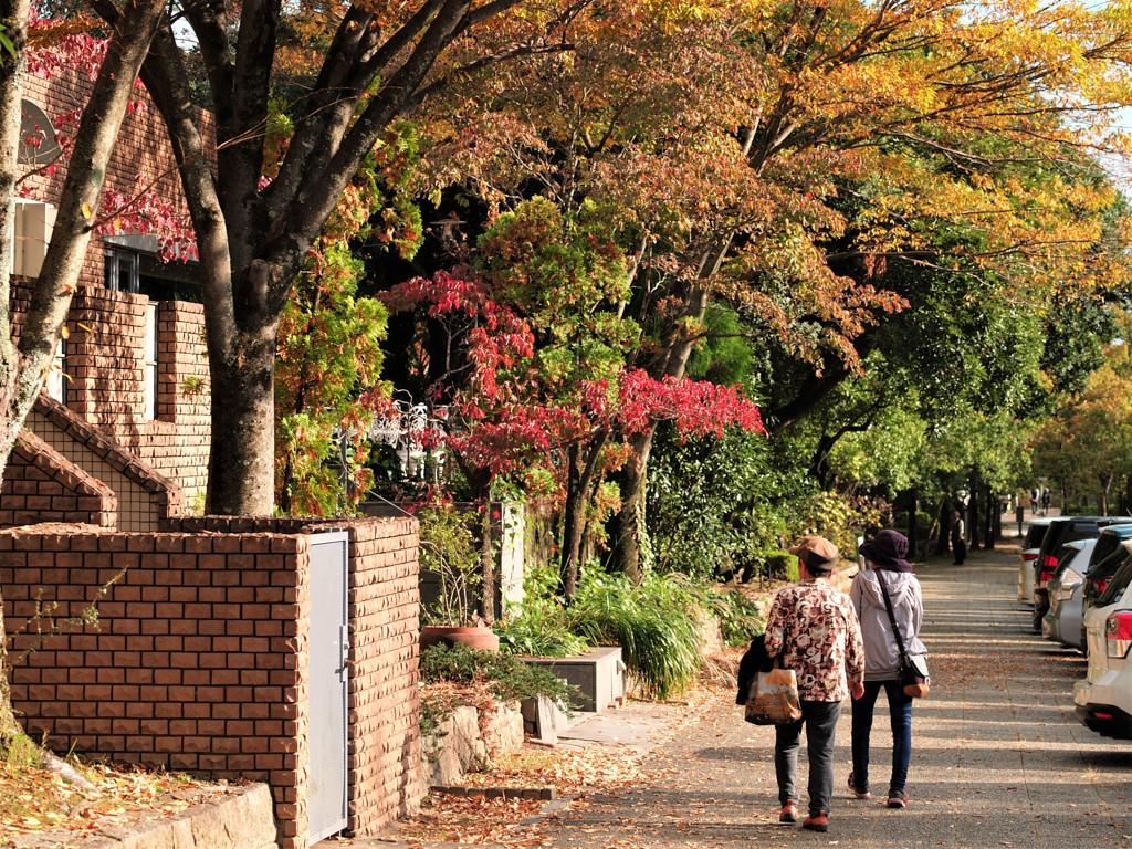 植物園通り