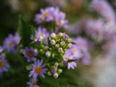 畑に咲く花