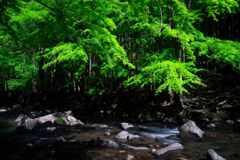 渓流の薫風