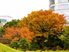 ビルの谷間の秋