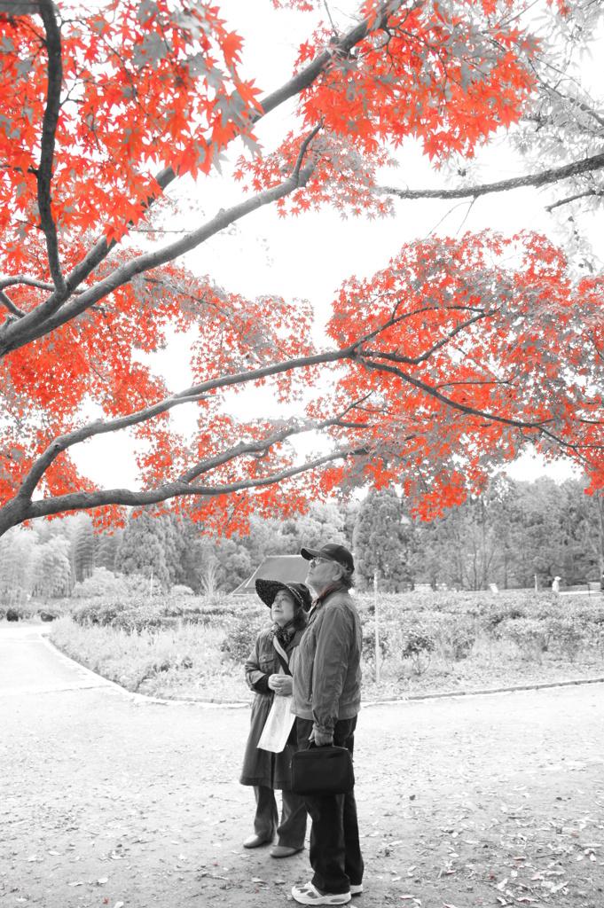 紅色の木と夫婦
