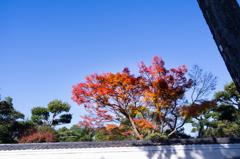 白壁に秋の色