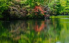 錦大沼に秋の装い