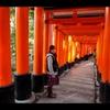 秋の京都を往く