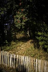 竹垣に山茶花