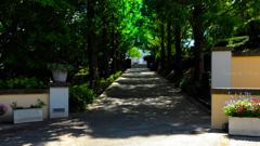 木陰の小路