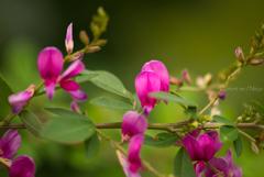 秋 禅寺に花の賑わい