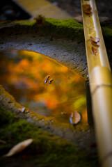 秋の彩に浮いて