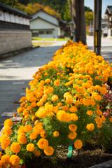 花咲く通学路