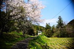 花咲く駅前