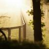 朝靄と・・・