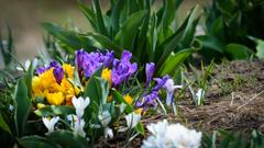 北国の春は五月