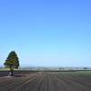 玉葱畑の春