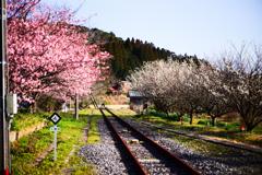 上総亀山の春