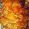 秋の森林浴