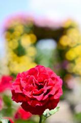 薔薇色ゲート