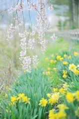 安曇野に春の訪れ