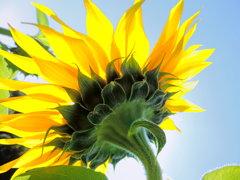 太陽の恩恵