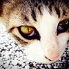 cat's-eye