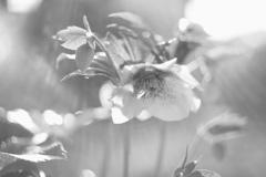 my -garden