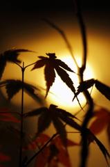 - an autumn wind -
