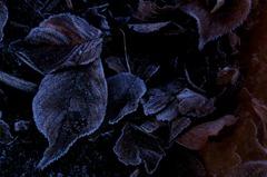 冬色のヴェール