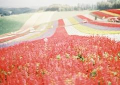 花のじゅうたん*