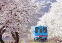 Sakura railway2