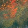 川面に浮かぶ ゴーギャン