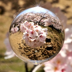 宙玉レンズ12〜桜