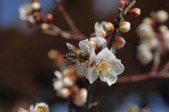 蜜を集めるのに忙しい?