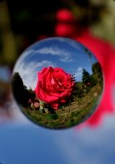 宙玉レンズ7〜薔薇