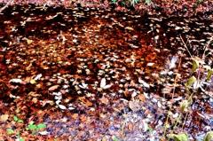 水面と落葉の世界