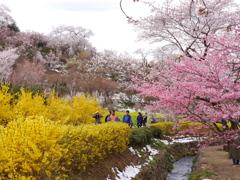 花見山公園2019Ⅱ