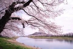 一目千本桜2021
